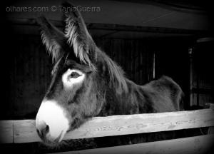 /Vida de burro