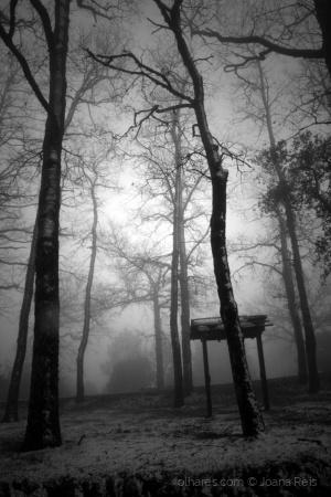 /Floresta (des)encantada