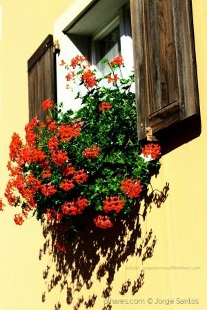 /janela feliz