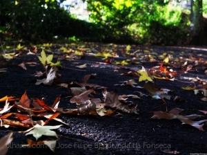 Paisagem Natural/Folhas caídas