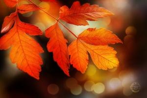 Paisagem Natural/Perfect Autumn