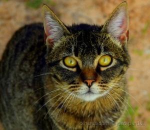 /Gato na Serra da Arrábida