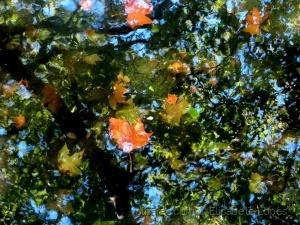 /Flutuações de Outono