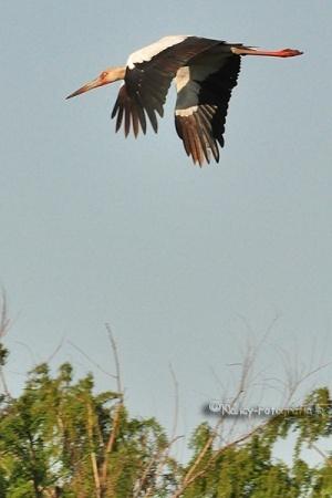 Animais/Levantando vuelo