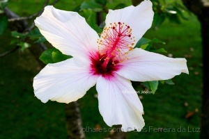Outros/Hibiscus Flower
