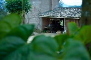 História/Canga de bois na varanda