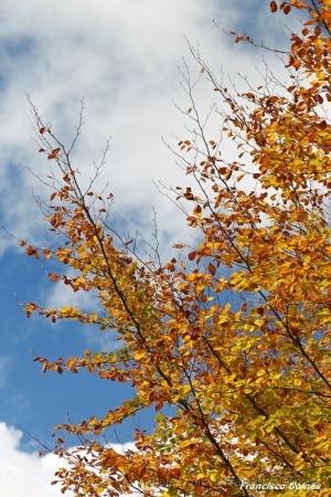 /Flores do Outono