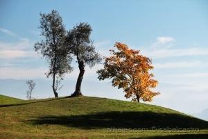 /As cores do meu outono...