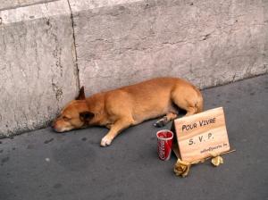 Animais/O cão pedinte....