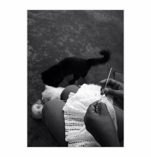/Linhas e gatos