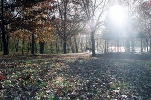 Paisagem Natural/Luz no parque
