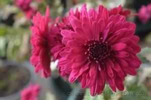 Outros/Flor Púrpura.
