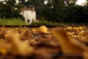 Paisagem Natural/Adivinham que fruto é ?!