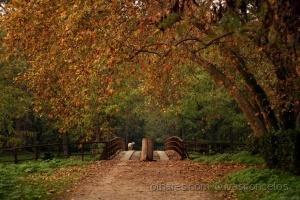Paisagem Natural/Lindo Outono