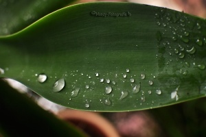 Outros/Gotas de lluvia