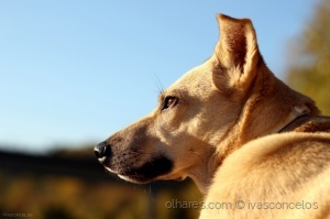 """Animais/""""Dogs know but do not tell."""""""