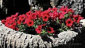 /A floreira