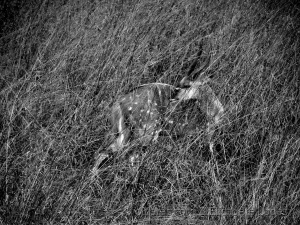 Animais/Camuflagem