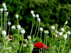 Paisagem Natural/As flores e os úteros
