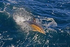 Animais/Golfinho na Escócia
