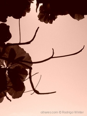 Outros/Folhas, galhos, solidão