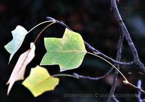 /As folhas que o vento não levou!!