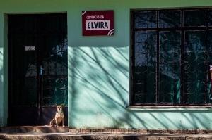/Elvira já vem...