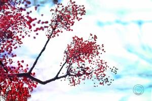 Paisagem Natural/winter