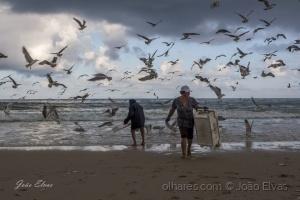 /O bailado das gaivotas