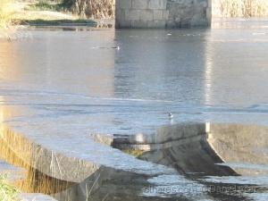 /Rio Igrejas - Gimonde - Convívio gelo e água.