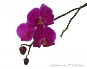 Outros/Orquídeas
