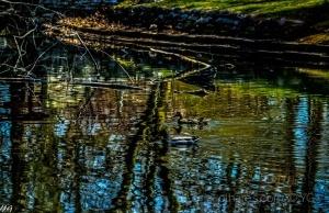 /Continuamos nadando entre os reflexos