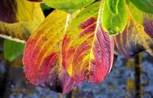 /cores de inverno