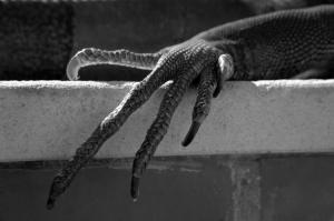 Outros/pata de iguana