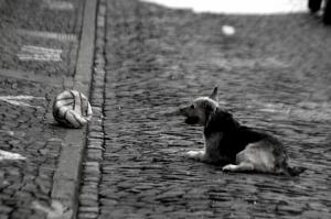 Animais/Tentação e Preguiça