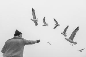 Gentes e Locais/o homem e as gaivotas