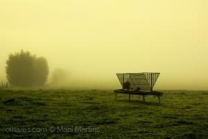 /neblina matinal