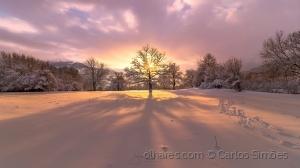 /Winter tree