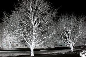 /Árvores são poemas que a terra escreve para o céu.