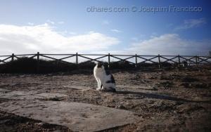 Animais/Pronto prá Foto