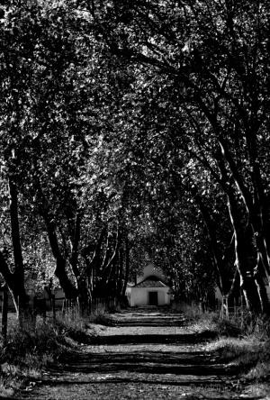 Paisagem Natural/A casinha ao fundo do túnel.