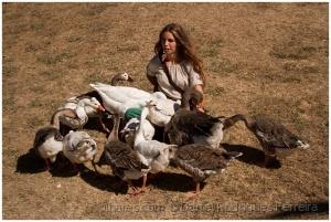 /A menina e os gansos