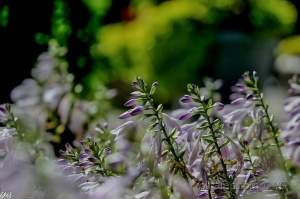 /Meu jardim