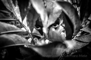 Gentes e Locais/Olhar escondido