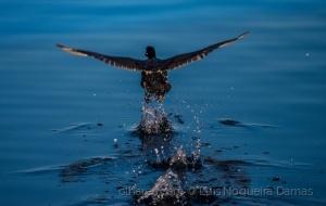 /Correr sobre as águas
