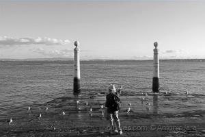 /O encanta dor de Gaivotas do rio Tejo (Lisboa)