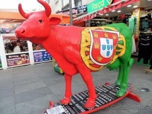 / vaca portuguesa - 2016