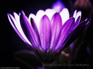 /Flores do Meu Jardim.. (Cintilante.. )