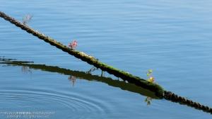 Paisagem Natural/A corda da Vida