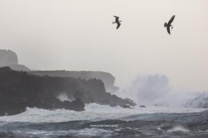 Fotojornalismo/Tempestade Doris / Açores